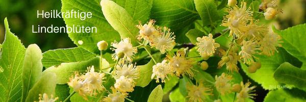 Heilkräftige Lindenblüte